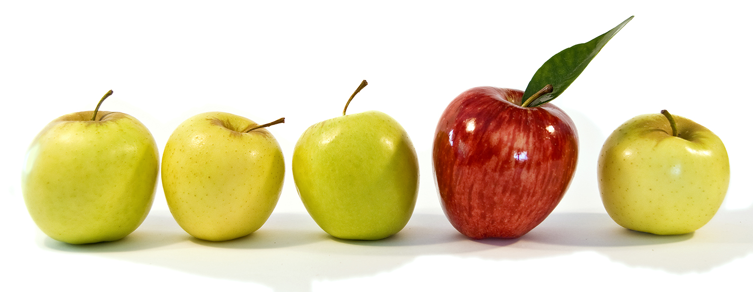 Shiny red apple amongst smaller yellow apples. The concept is individualism, leadership and standing out from the crowd